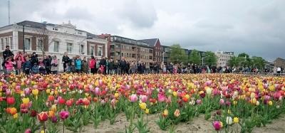 Foto van het tulpenveld