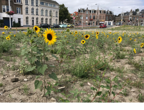 Zonnebloemen op veld House of Delft