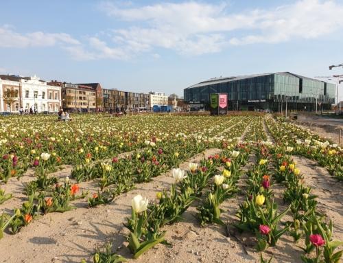 20 april: Plukdag van stichting DelftBloeit