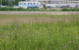 Zuidelijke velden met bloemen en op de achtergrond bouwwerkzaamheden